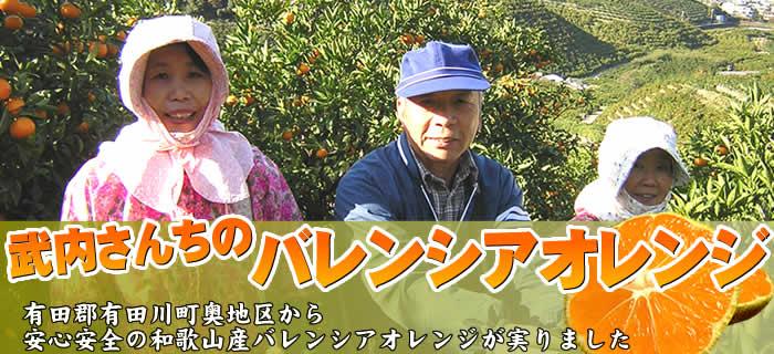 武内さんちのバレンシアオレンジ