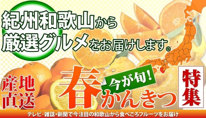 みかんの本場、紀州有田から 春みかん・春かんきつ特集