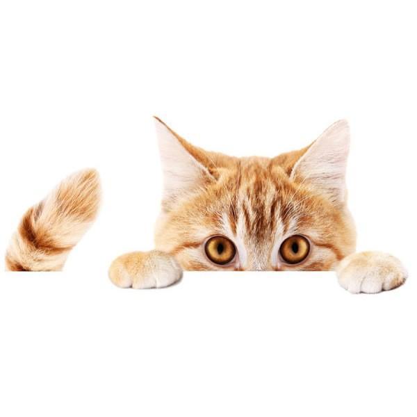 動物 カーステッカー アニマル 犬 猫 かわいい ドレスアップ 車 バイク カー用品 ステッカー|calmshop|12
