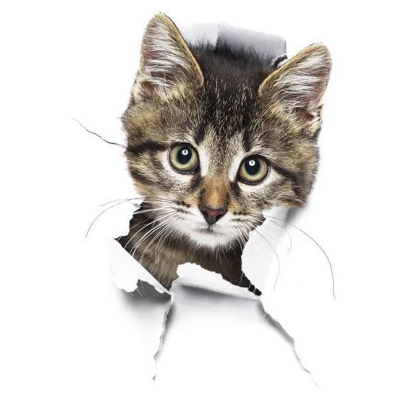 動物 カーステッカー アニマル 犬 猫 かわいい ドレスアップ 車 バイク カー用品 ステッカー|calmshop|09
