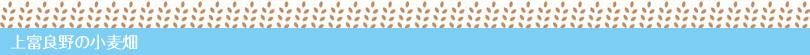 上富良野の小麦畑ギャラリー