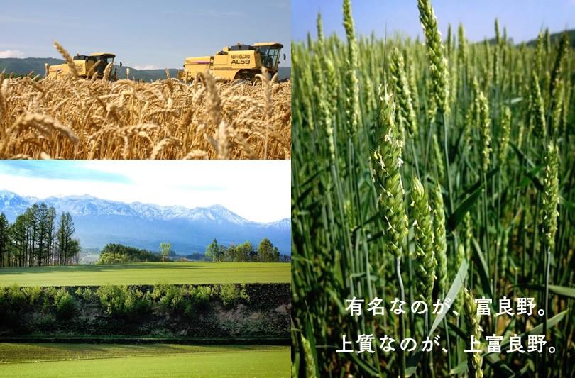 CAMIFLAGの小麦畑