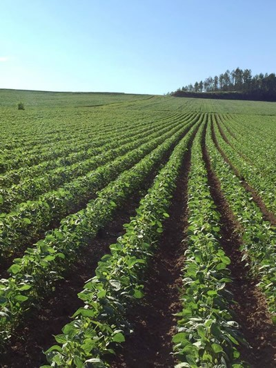 上富良野の小麦畑の写真3