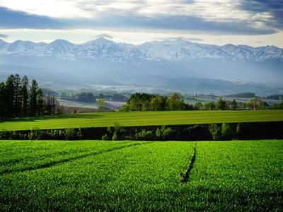 上富良野の小麦畑の写真6
