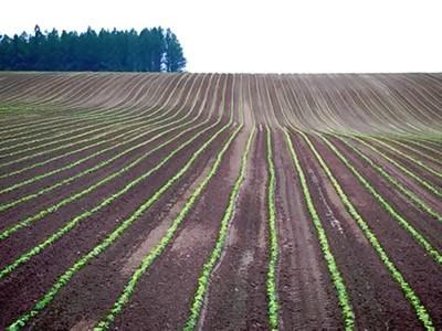 上富良野の小麦畑の写真7