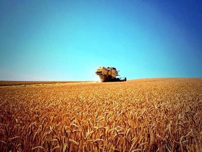 上富良野の小麦畑の写真8