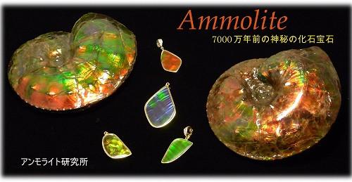 古代からの贈り物〜化石宝石〜アンモライト