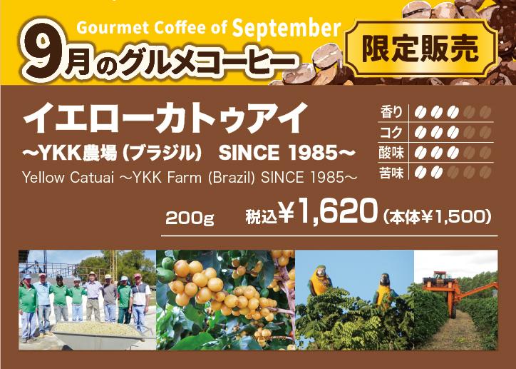 9月のグルメコーヒーはブラジルYKK農園から取り寄せたイエローカトゥアイ【CAPITAL/キャピタルコーヒー】