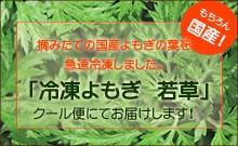 ★国産の摘みたてのよもぎの新芽を急速冷凍