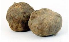 強い粘りが特徴の『つくね芋』