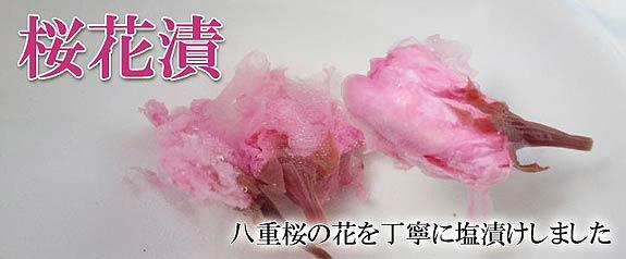 桜花漬 八重桜の花を丁寧に塩付けしました