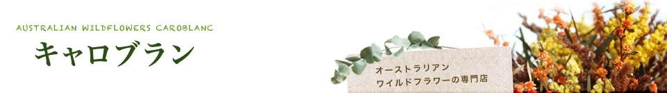 神秘の花オーストラリアンワイルドフラワーの専門店