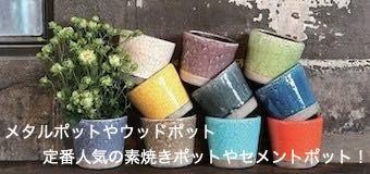 素焼きポット セメントポット DOMANI