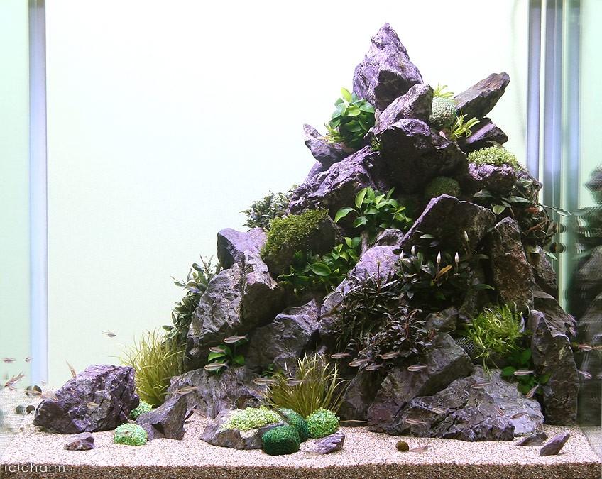 拘る水草レイアウトの作り方 岩稜を生き抜くいのち