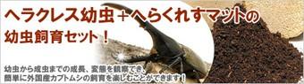 ヘラクレス幼虫セット