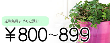 ¥800〜¥899