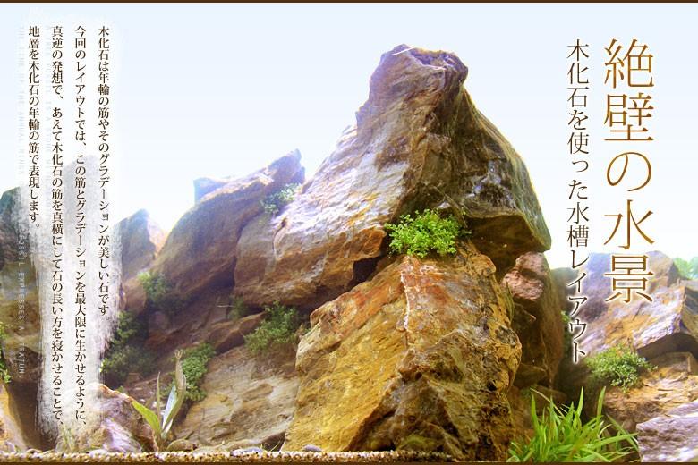 絶壁の水景 木化石を使ったレイアウト