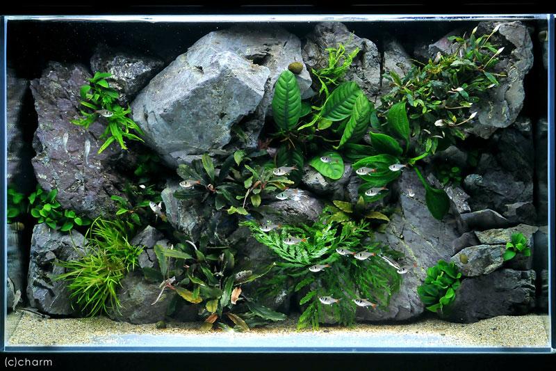 拘る水草レイアウトの作り方 岩肌と植生のMOSAIC
