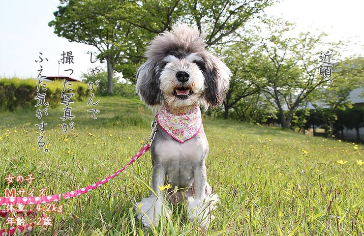 犬のバンダナアップ写真