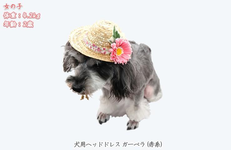 犬のヘッドドレス麦わら帽子ガーベラ赤