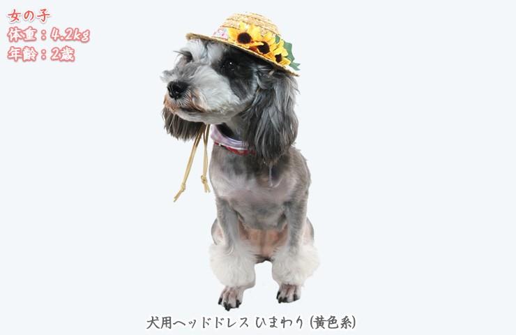 犬のヘッドドレス麦わら帽子ひまわり