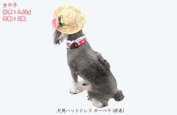 犬のヘッドドレス麦わら帽子ひまわり後ろ姿