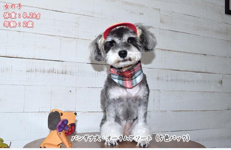 犬のバンダナタオータム柄写真