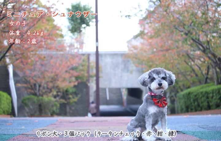 犬のバンダナタータンチェック柄写真