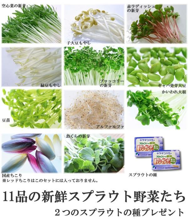 スプラウト野菜たち素材