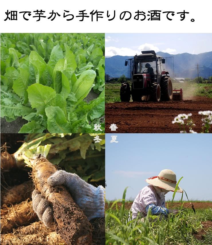 畑で芋から手づくり焼酎ちこちこ011