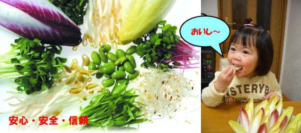 無農薬野菜セット子供がおいしー写真
