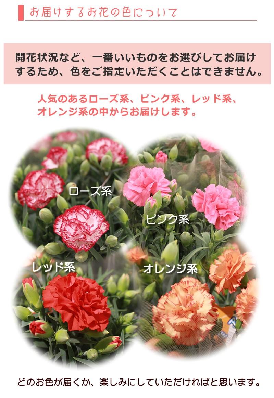 一番いい状態のものをお届けするためお花の色は選べません