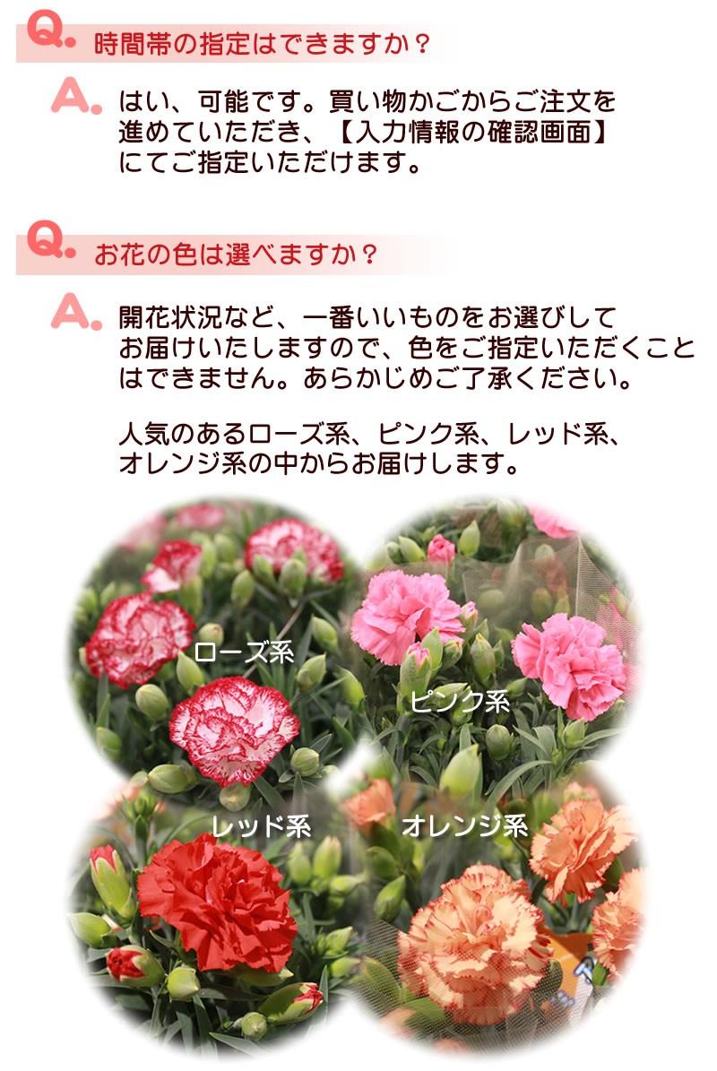 Q&A時間指定とお花について