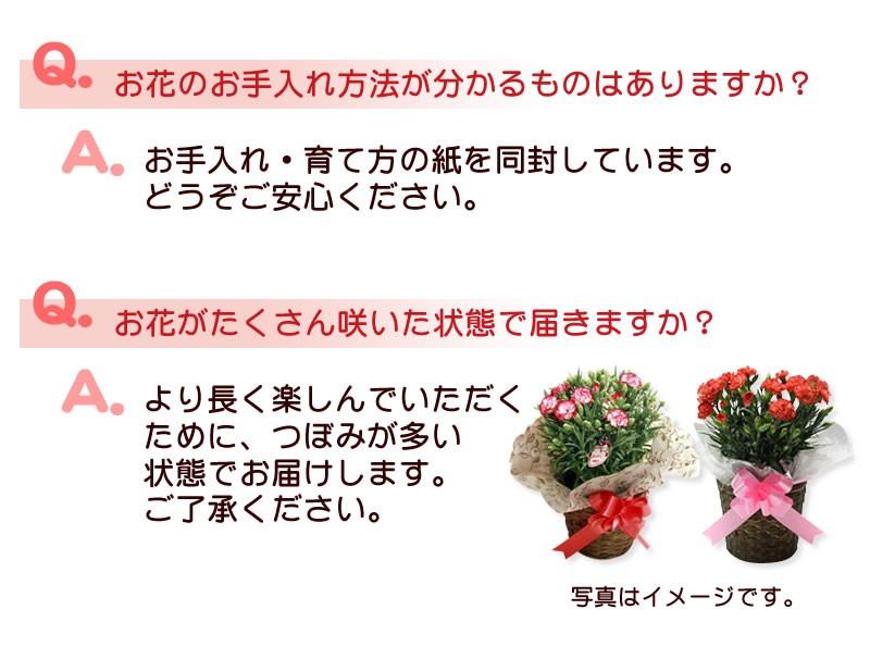 Q&Aお花について2