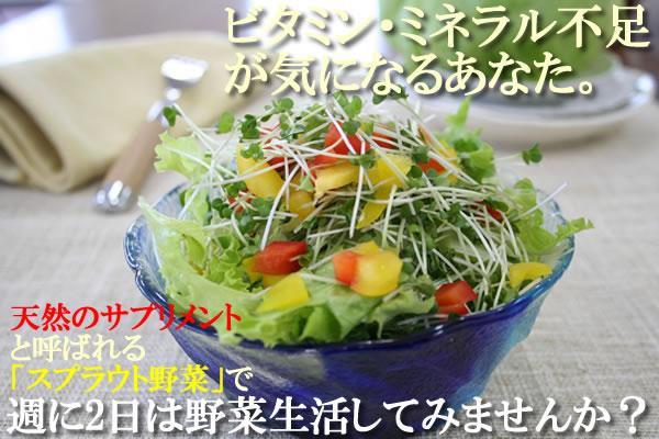 ビタミン・ミネラル不足が気になるあなた。週2日は野菜生活してみませんか?