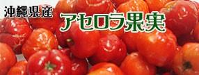 沖縄県産 アセロラ果実