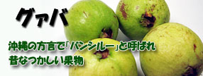 沖縄県産 グァバ果実