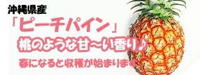 沖縄県産 ピーチパイン