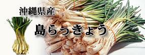 沖縄県産 島らっきょう 生 野菜