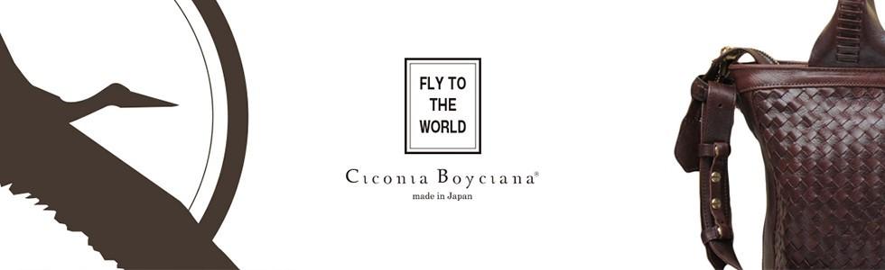Ciconia Boyciana Yahoo!店(キコニアボイキアナ)