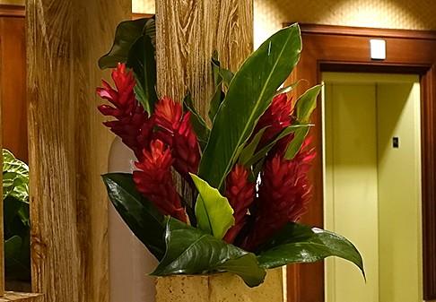 南国 赤い花