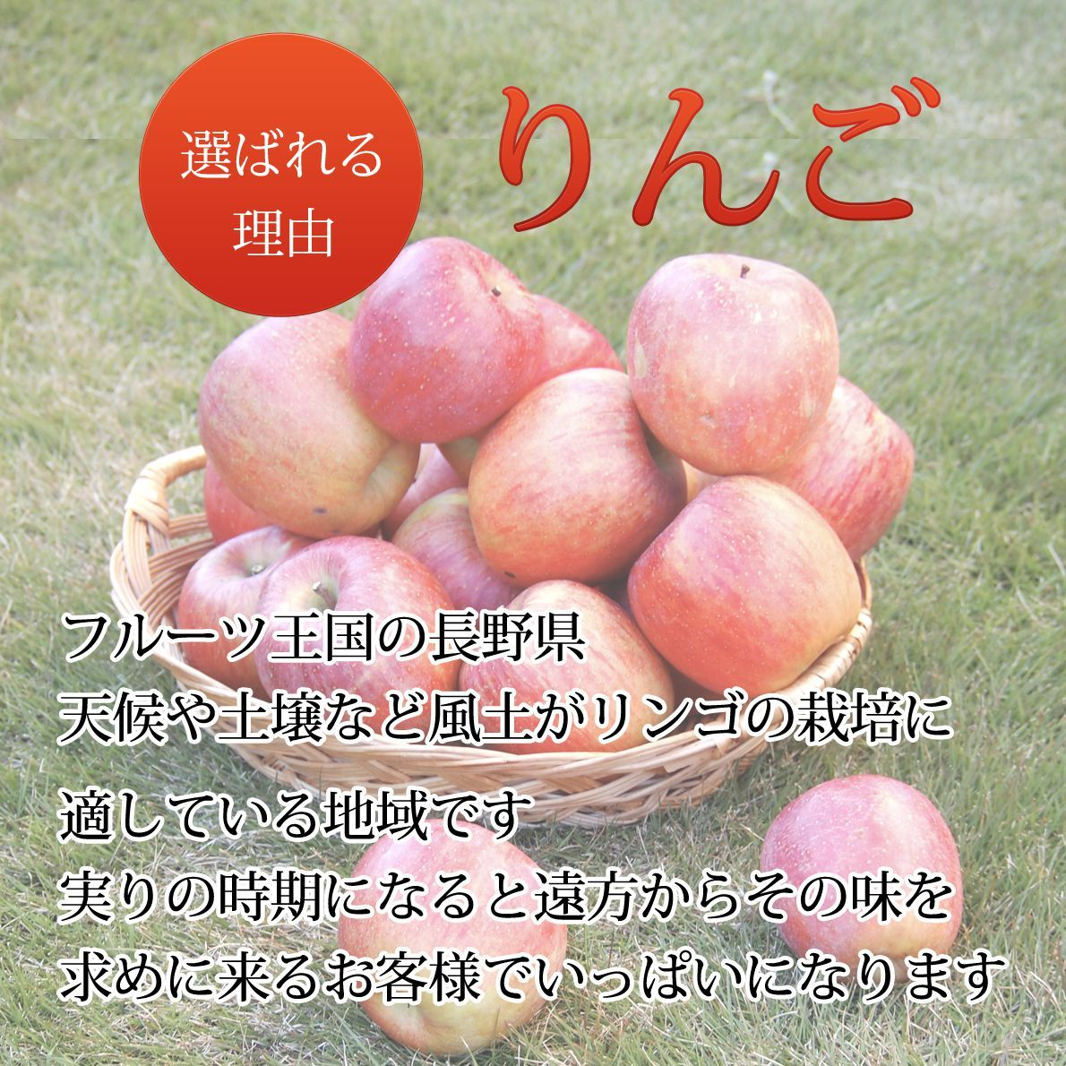 長野県りんご