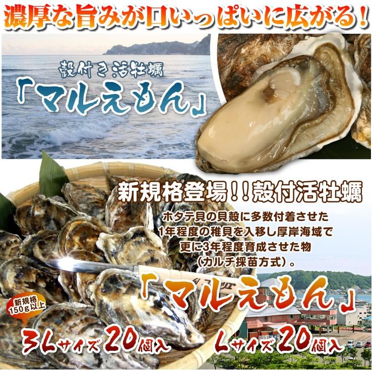 Lサイズ 2Lサイズ 3Lサイズ 「マルえもん」ホタテ貝の貝殻に多数付着させた1年程度の稚貝を入移し厚岸海域で更に3年程度育成させた物(カルチ採苗方式)。新規格登場!!殻付活牡蠣殻付き活牡蠣「マルえもん」濃厚な旨みが口いっぱいに広がる!