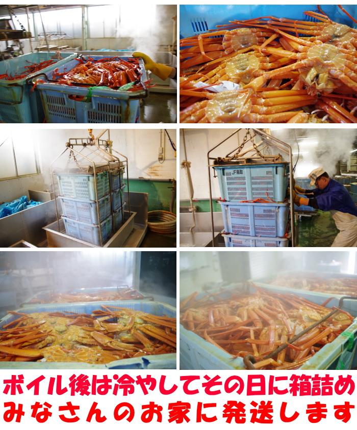鳥取未冷凍紅ずわい蟹取材3