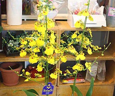 黄色の幸せを呼ぶ花