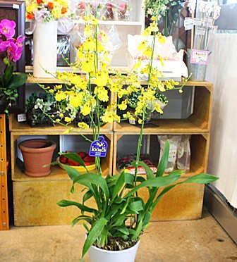 ランの花 蘭鉢