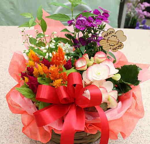 長持ちする花 花鉢 鉢植え 寄せ鉢