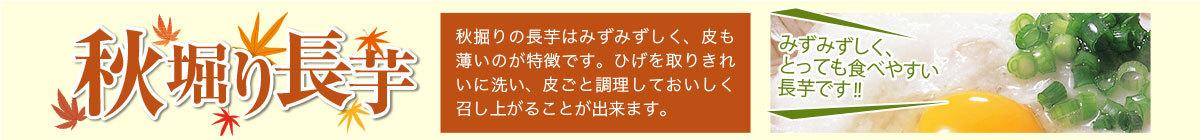 秋堀り長芋