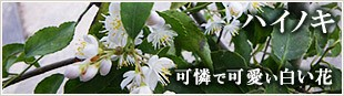 可憐で可愛い白い花