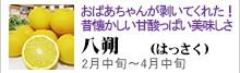 八朔(はっさく)